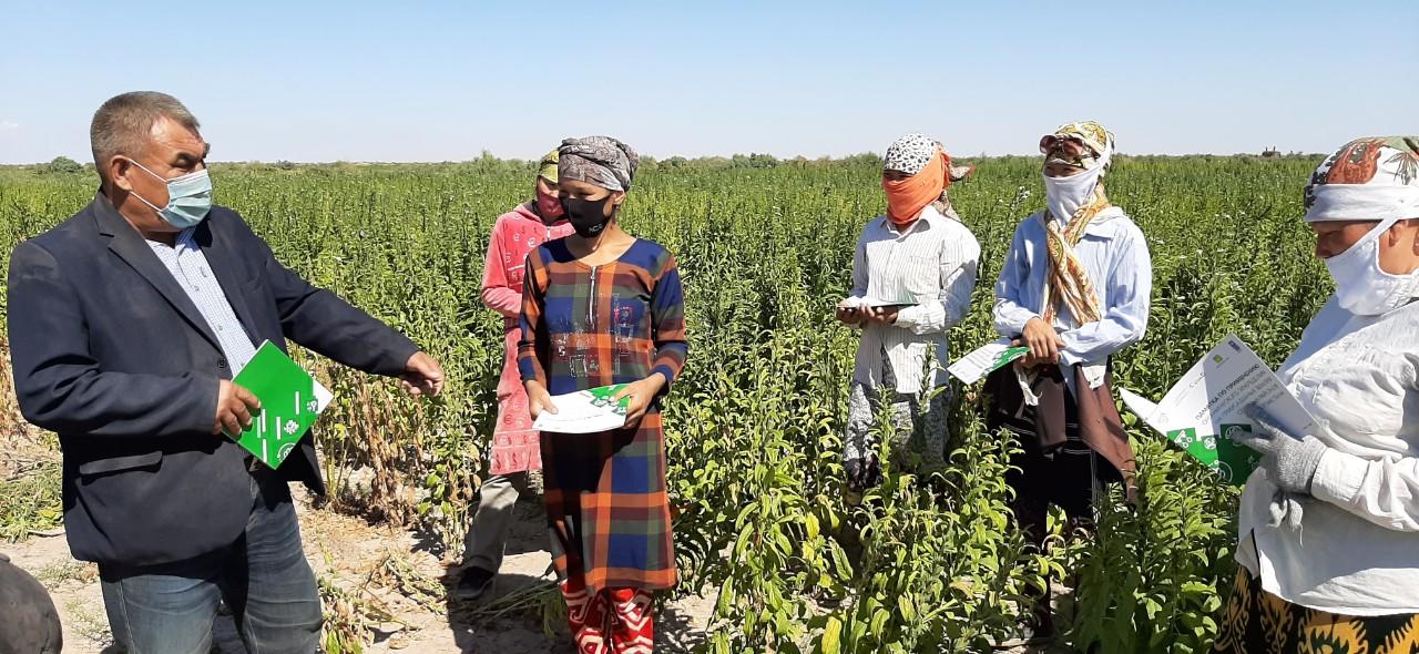 Planting efficiently: New methods of organic farming